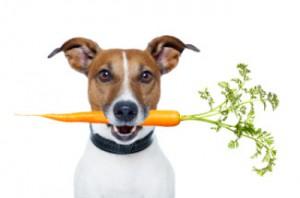 pet-nutrition-325x215